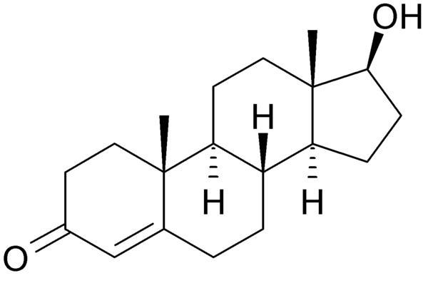 Testosteroon ja toitumine
